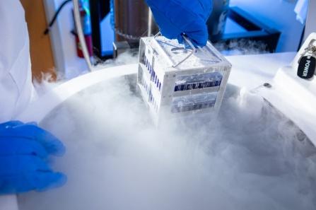 Hands lift samples out of a nitrogen freezer.