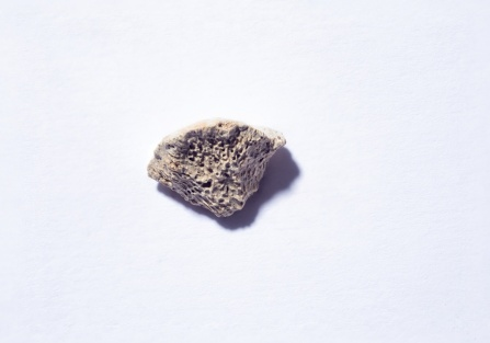 Image of the dog bone fragment, which is neutral-colored and full of divets.