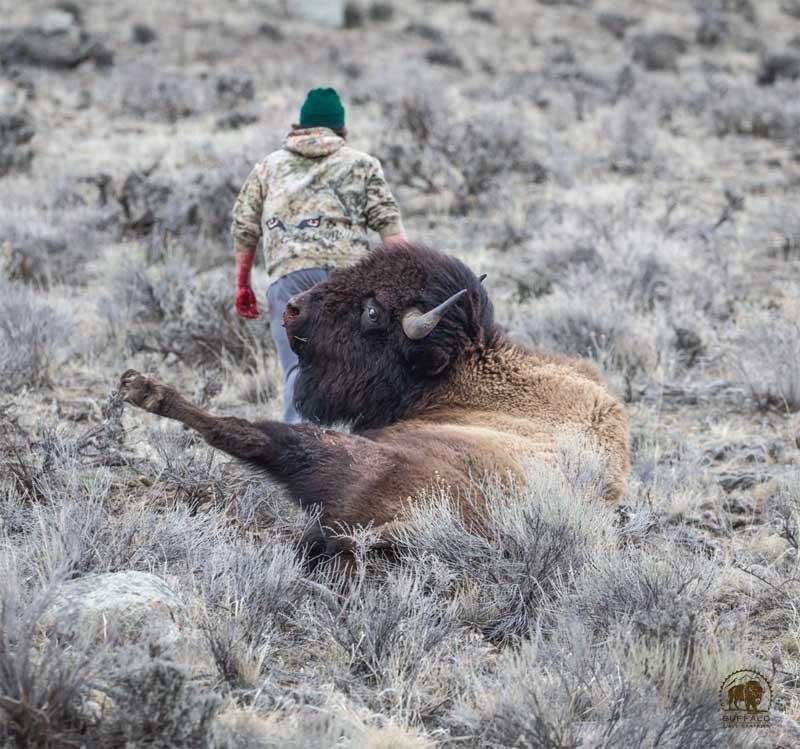 Bison Slaughter 8