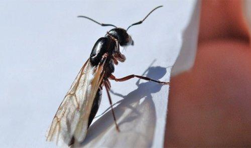 Топ-25: Впечатляющие причины, делающие муравьёв удивительными существами