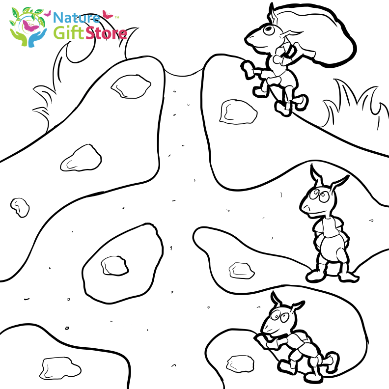Bug Museum Bug Coloring Pages Ant 10