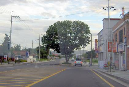 tree in Ildong