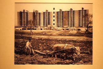 Apgujeong, 1977