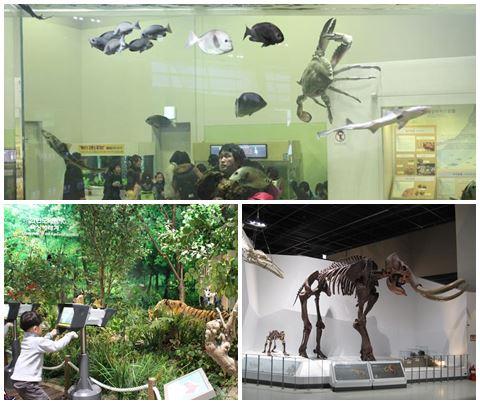 Aquariums, a mini-jungle and dinosaur bones!