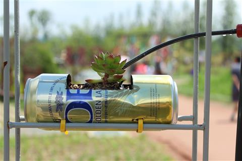 Planting with used cans