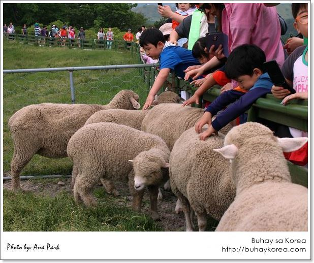 Kids and sheep ~ can't get any cuter than this!
