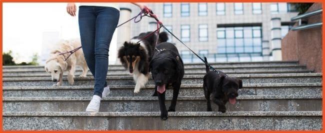 Business ideas for kids - Dog Walker