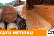 Photo of Mengenal Kayu Merbau, Kegunaan dan Harga pasar Kayu Merbau