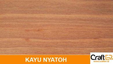 Photo of Mengenal Kayu Nyatoh, Kegunaan dan Harga Kayu Nyatoh