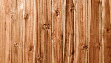 Photo of kayu Akasia Mangium, Harga Kayu Akasia dan Karakter Kayu Akasia Mangium