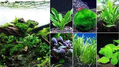 Photo of Tanaman Aquascape, Tips Memilih Berbagai Tanaman Aquascape