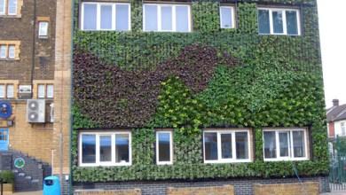 Photo of Mengenal Green Wall Solusi Eksterior Bangunan Ramah Lingkungan