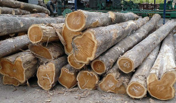 harga kayu jati perhutani
