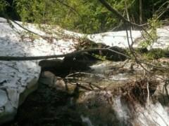 まだ雪の残る沢