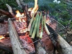 焚き火でネマガリタケを焼く
