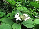 キャンプ場入口手前に咲く花