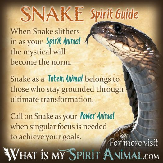 Dreams About Snakes - The Complete Guide to Snake Dream Symbols & Meanings