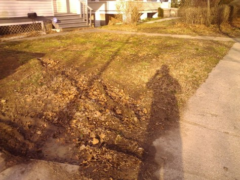 Patchy Lawn with Tire Track Ruts