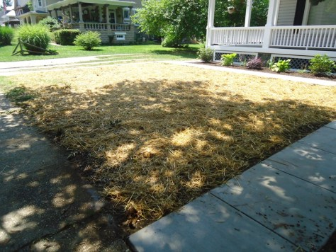small front lawn seeded and strawed
