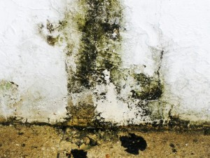 black mold on a concrete foundation