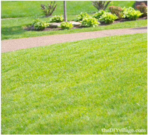 Healthy Grass with a Walkway TheDIYVillage