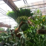 And More Orchids