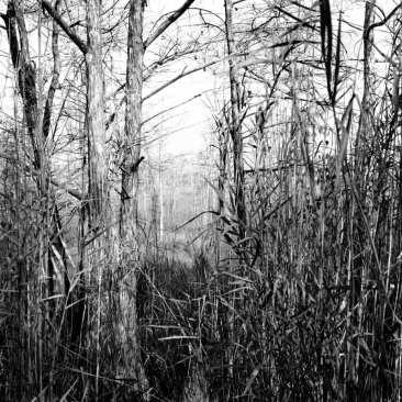 Cypress Prairie, Fakahatchee Strand, The Everglades, FL