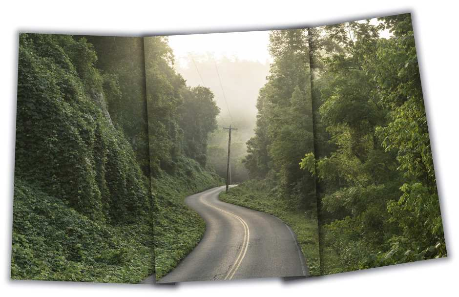 Kudzu - near Hiwasee River Tennessee