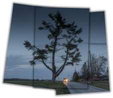 Scenic - Pennsylvania Pine Tree