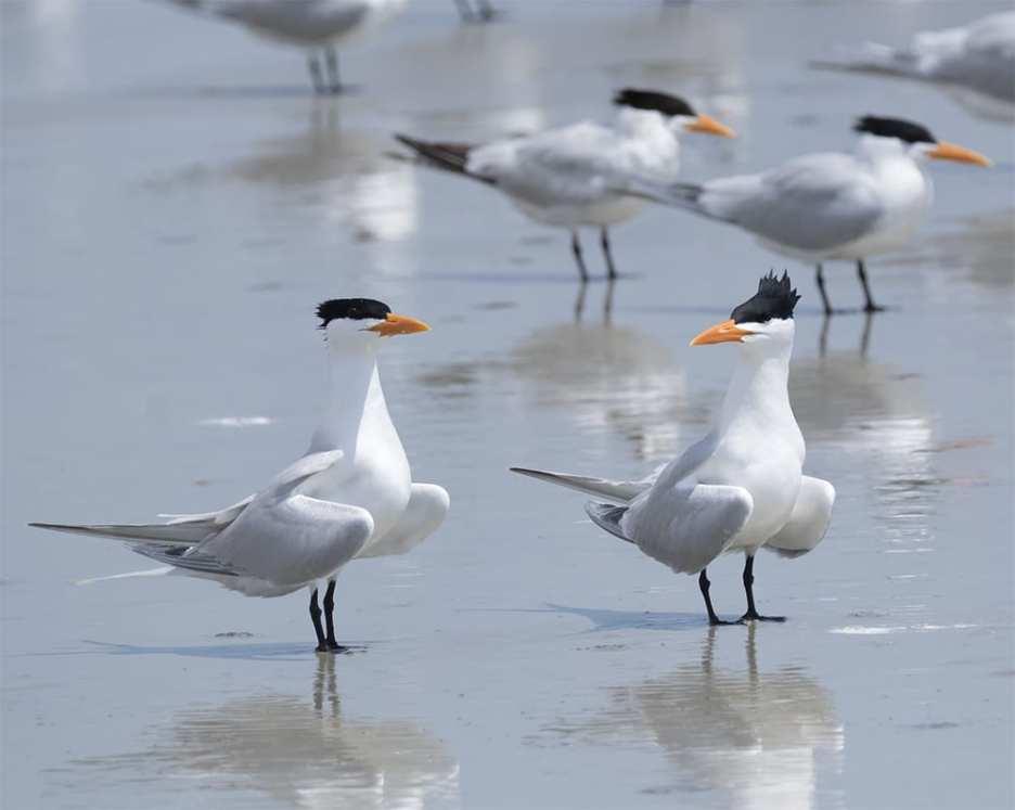 It is so my Tern ©Jeff Stoner