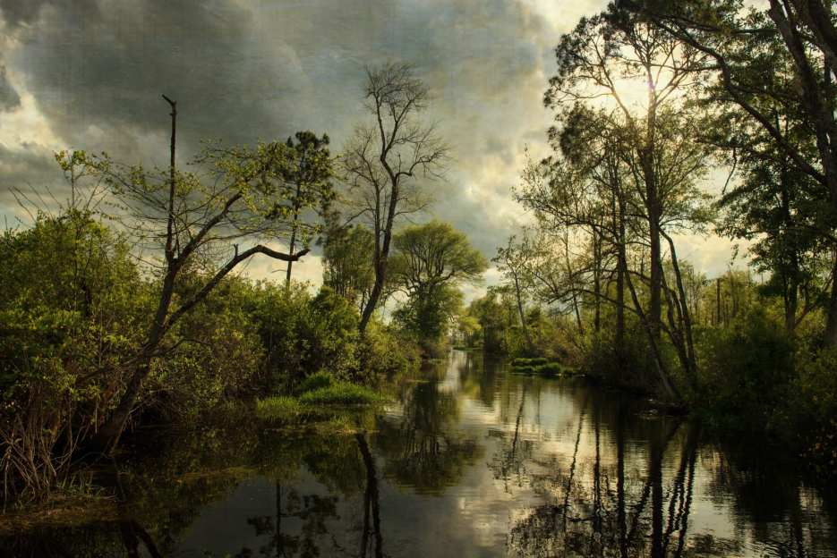 Okefenokee ©Lucie Canfield