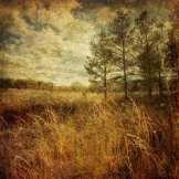 Winter The North Meadow ©KarenKlinedinst