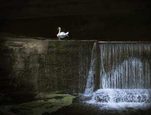 Swan, Lancaster County, Pennsylvania
