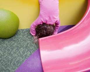 Pink Slide ©PollyGaillard