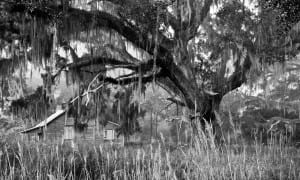 Beate Sass – Tall Timbers Plantation Project
