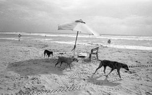 Three Dogs, Mexico, ©David Carol