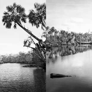 Upriver 2004 & 2014