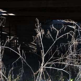 Barn on Pea Ridge Road, Taylor, Mississippi