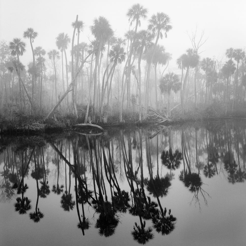 Chassahowitzka Saltwater Intrusion | Benjamin Dimmitt