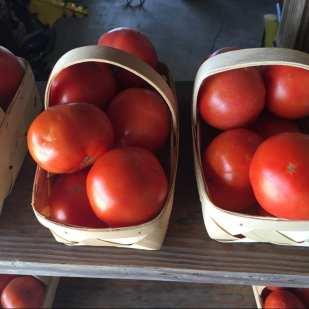 Tomatoes on display at the Burris Stand in Loxley, Alabama ©Robert Schaefer