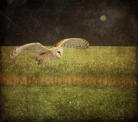 Night Flight ©Dale Niles