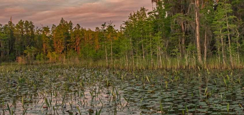 SxSE PhotoWorkshops on Cumberland Island & in the Okefenokee Swamp | April 2018 with Peter Essick instructing