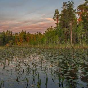 Full Moon and Reflection Over the Okefenokee Swamp ©Lynne Buchanan