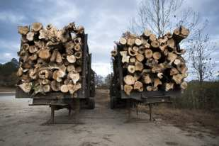 Logging Trucks, Hickory Flat, AL ©Forest McMullin