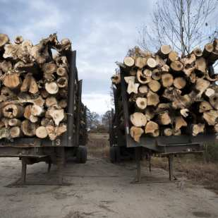 Logging Trucks, Hickory Flat, AL ©Forest McMullin