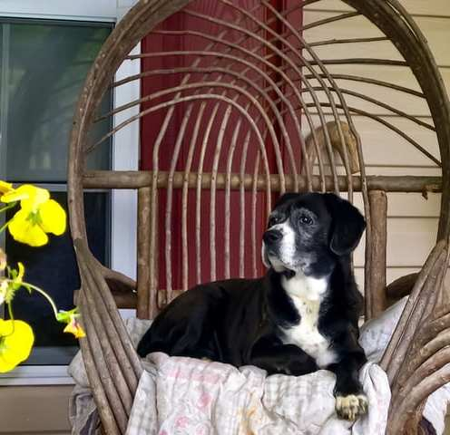 Maggie, Queen of the Porch ©Malgorzata Florkowska