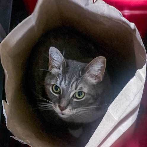 Mick in a Bag in a Box ©SL Behr