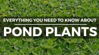 Pond Plants: 13 Popular Types & How to Keep Them (Complete ...
