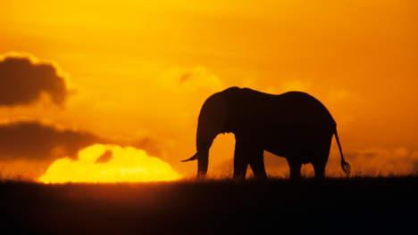 STEUN   De olifant en de slak