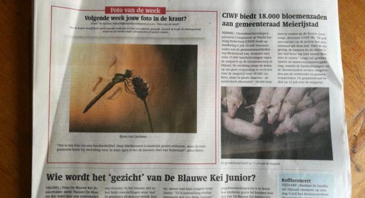 Foto van de week in de Stadskrant Veghel.